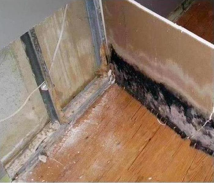 Mold in dry wall